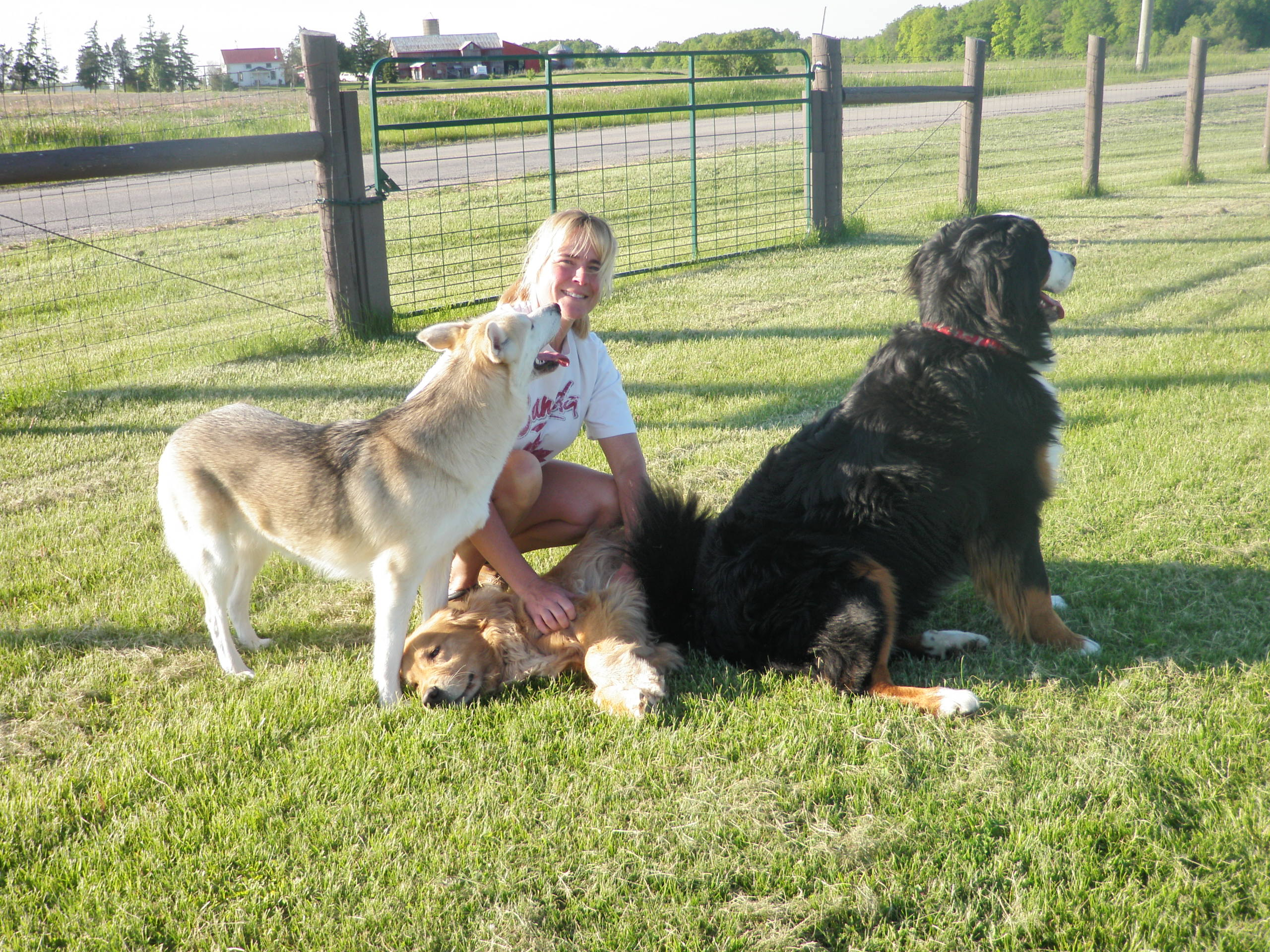 Why Choose a Professional Pet Sitter